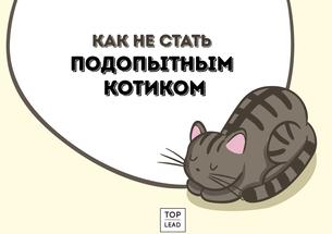 Маркетинг Шредингера: как не стать подопытным котиком маркетингового агентства